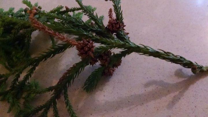 q help identifying tree branch, gardening, plant id