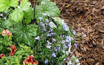 summer container gardening ideas, container gardening, flowers, gardening, seasonal holiday decor