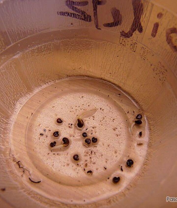 Seed soaking method