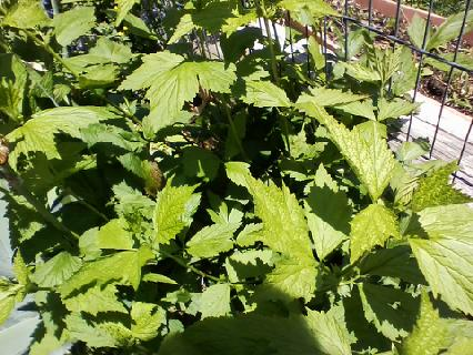 q anyone know what this is , gardening