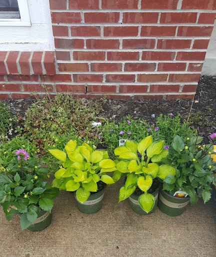 diy wooden planter boxes, container gardening, gardening, woodworking projects