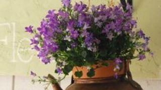 , Flowers pot using Cattle