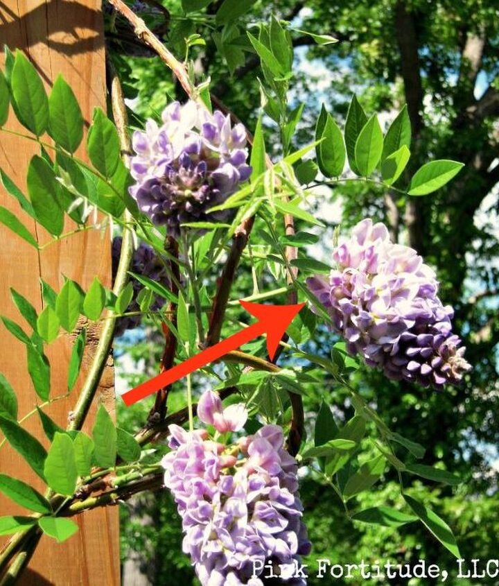 s 11 beatiful plants that are secretly killing your garden, gardening, Wisteria