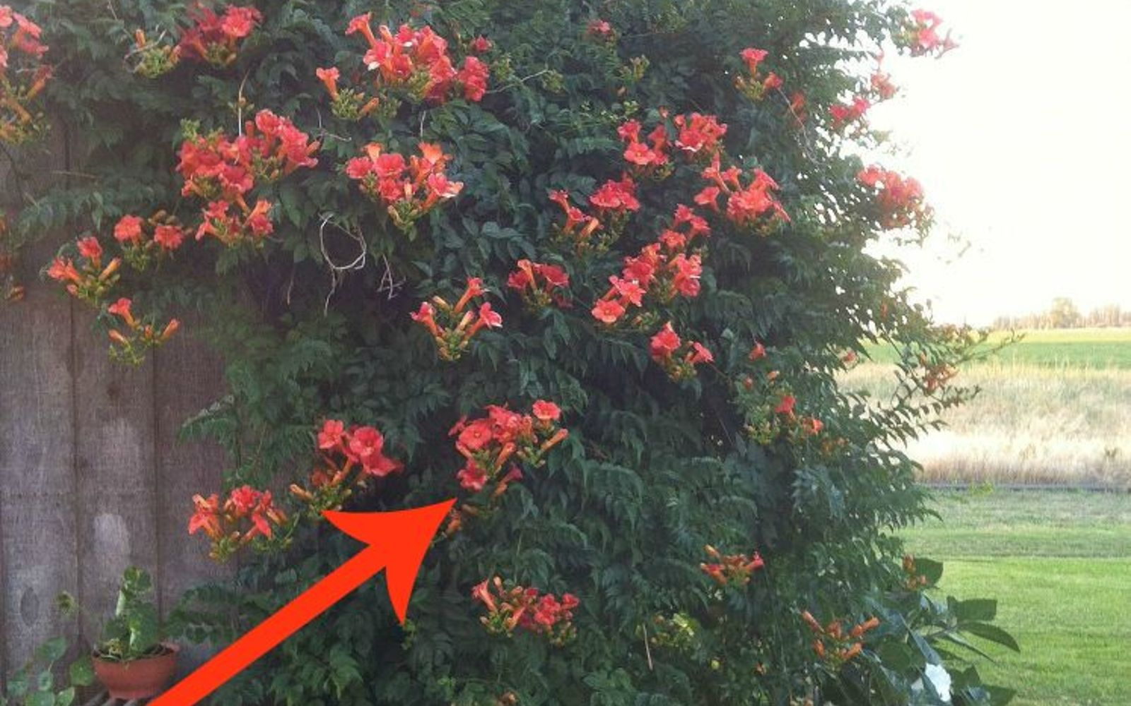 11 Beautiful Plants That Are Secretly Killing Your Garden