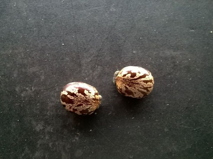 q what is this , flowers, gardening, plant id, These plants grew from these seed