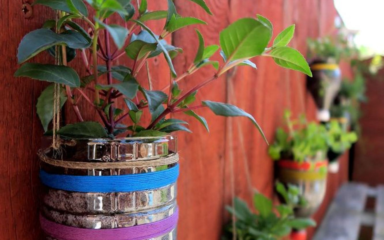 s 12 smarter ways to garden on a budget, container gardening, gardening, repurposing upcycling, Plant inside empty containers or recyclables