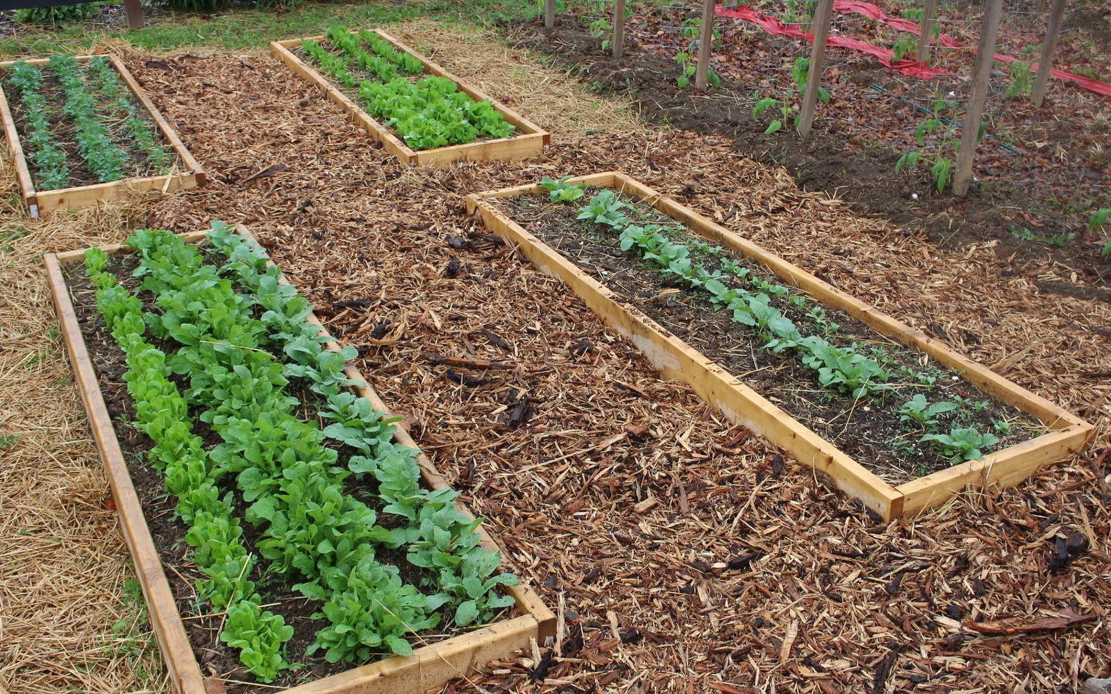 s 12 smarter ways to garden on a budget, container gardening, gardening, repurposing upcycling, Kill weeds using your own natural solutions