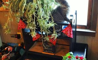 indoor cat garden, pets animals, repurposing upcycling, Emily inspecting the plant