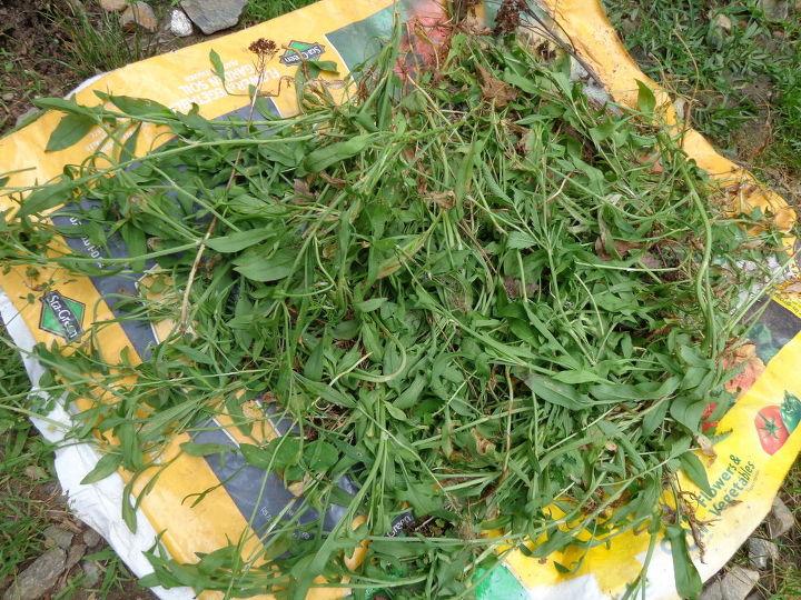 q plant identification by leaves, gardening, plant id, Plant ID