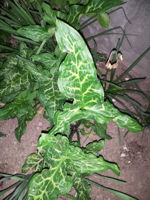 q can you tell me what kind of plant this is , gardening