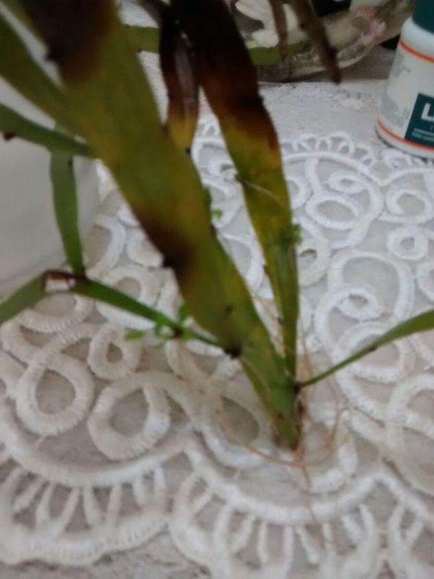 q please help me identify this plant , gardening, plant id