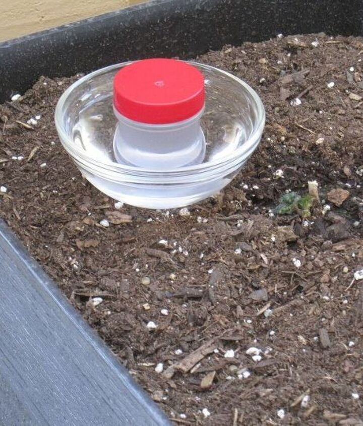 s 10 amazing ways to attract hummingbirds to your garden, gardening, pets animals, Poke a hole in a jar of sugar water