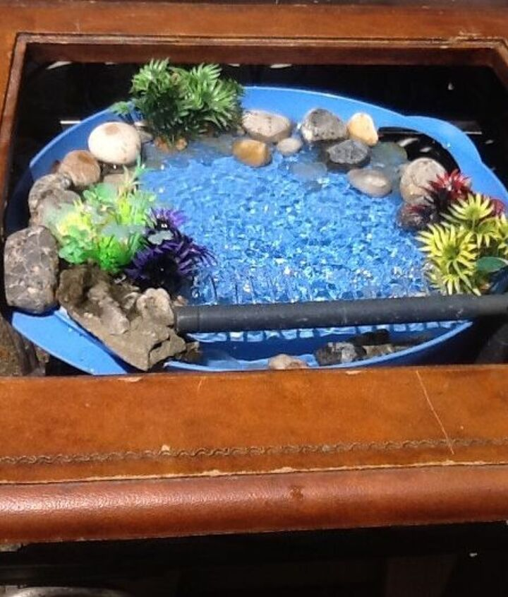 s 10 amazing ways to attract hummingbirds to your garden, gardening, pets animals, Make a bath from a plastic tray some stones