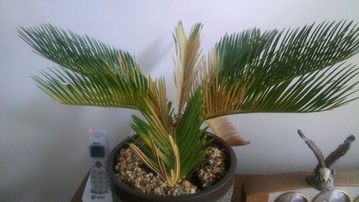q need help plant identification and care, gardening, plant care, plant id