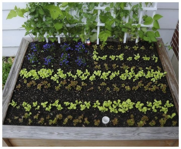 s 13 easiest ways to build a raised vegetable bed in your garden, gardening, Make them even prettier with patterns