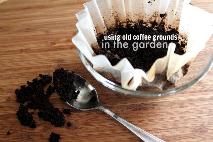 5 fun ways to use coffee grounds in the garden, composting, gardening, go green, homesteading