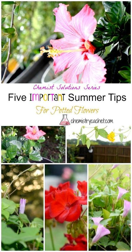 5 Important Summer Tips For Potted Flowers Hometalk
