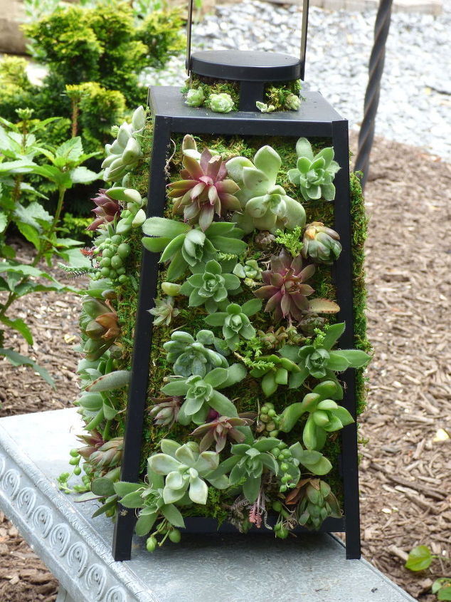 s 17 insanely fun ways to display your favorite succulents, flowers, gardening, succulents, Cover an old lantern in moss and succulents