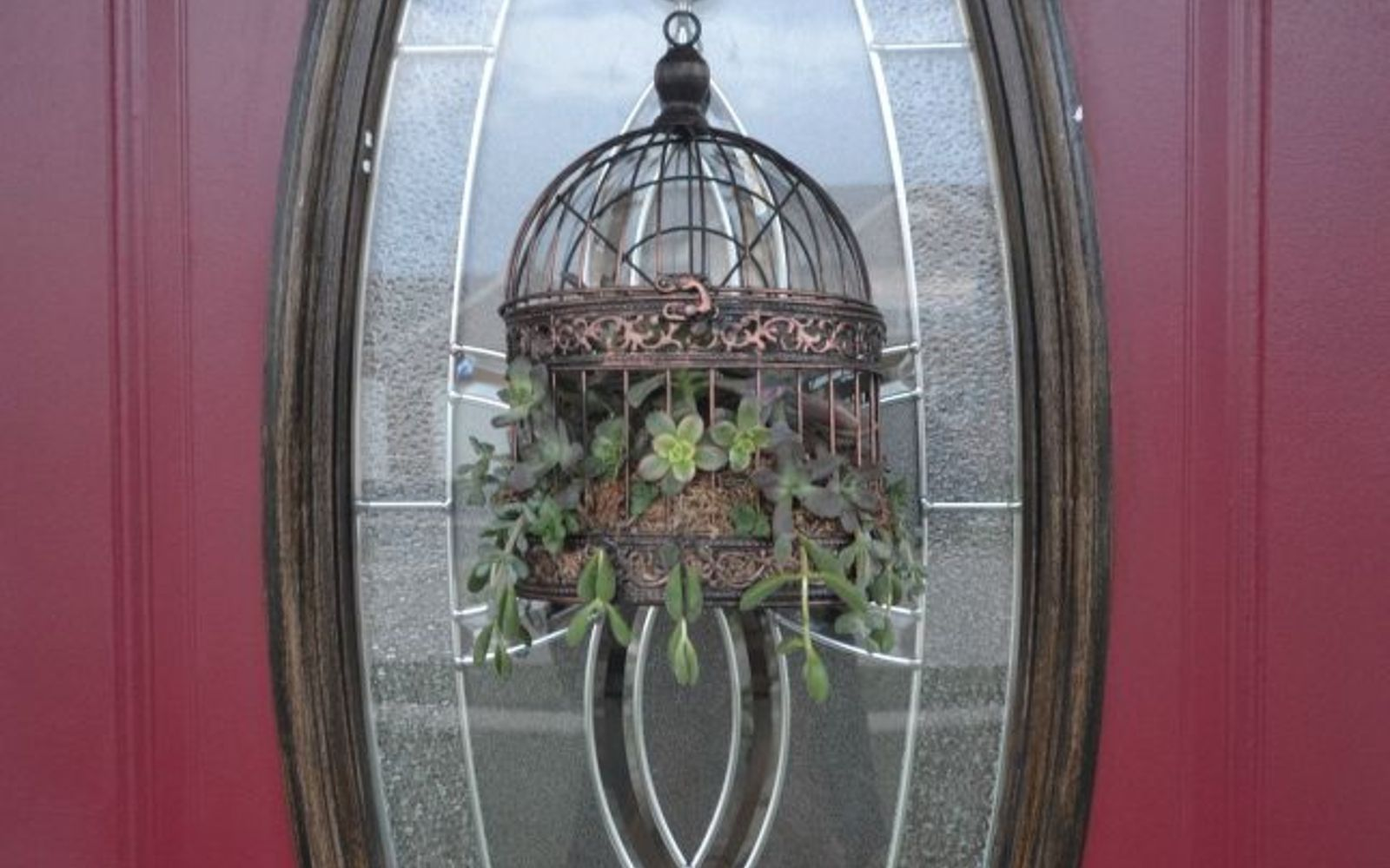 s 17 insanely fun ways to display your favorite succulents, flowers, gardening, succulents, Fill a birdcage for some front door decor