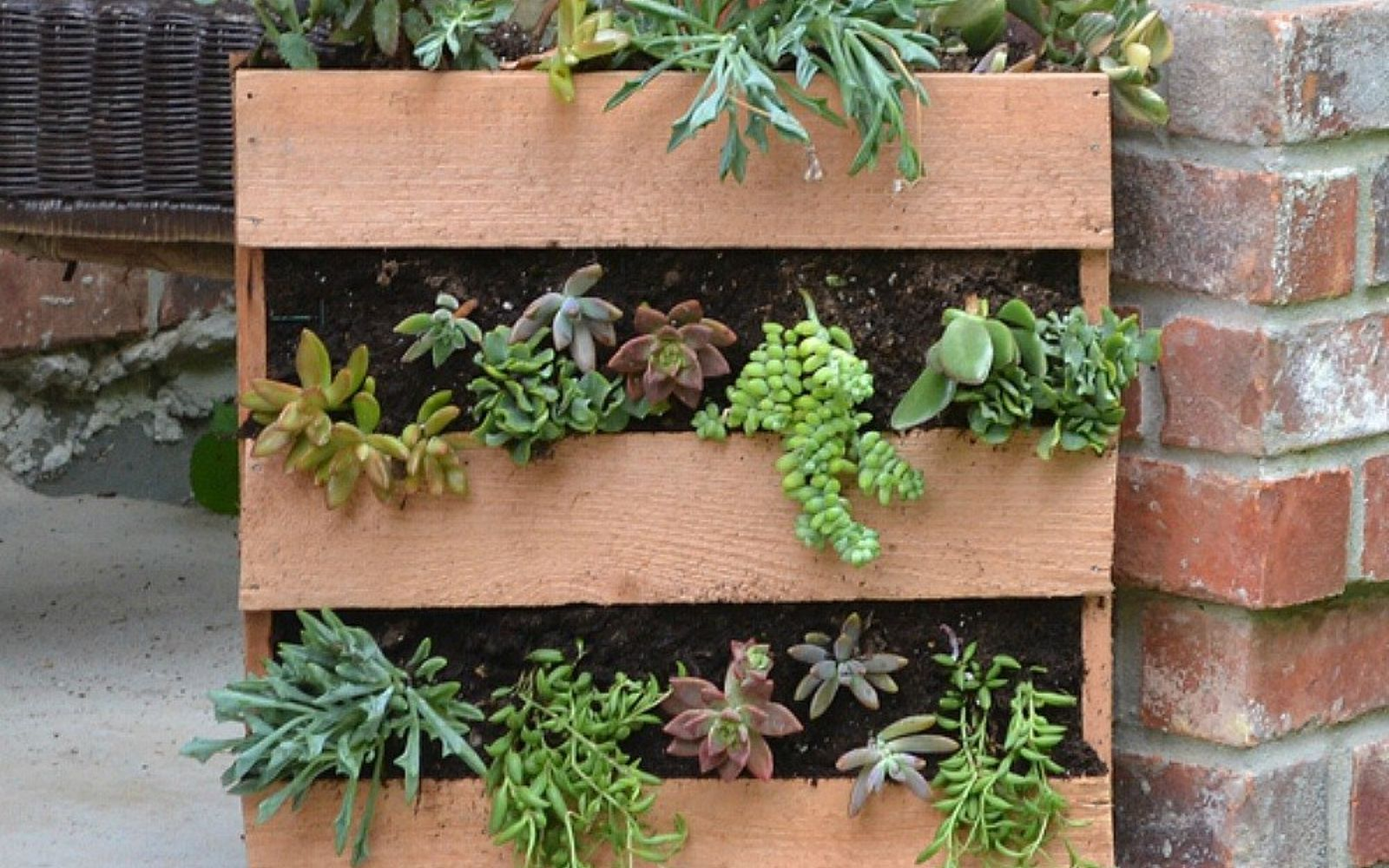 s 17 insanely fun ways to display your favorite succulents, flowers, gardening, succulents, Build a faux pallet planter for your porch