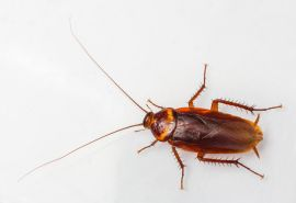 q help i have a cockroach infestation ugh , home maintenance repairs, pest control