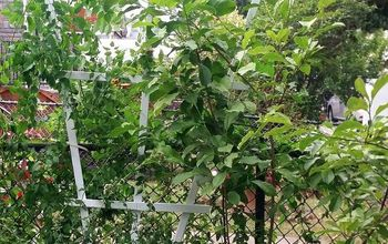 Easy DIY Fan Trellis to Spruce up Your Vines & Creepers