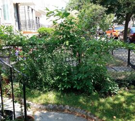 Easy DIY Fan Trellis to Spruce up Your Vines Creepers Hometalk