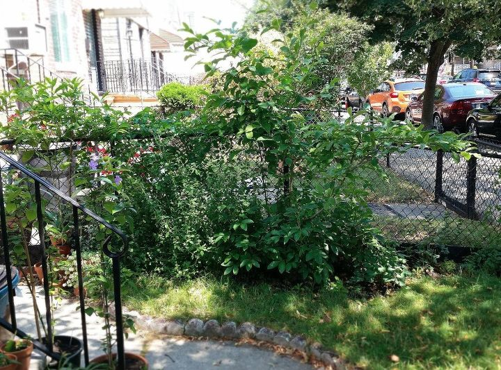 How large should your trellis be?