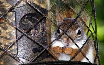 Feeding Birds by Keeping Squirrels Away
