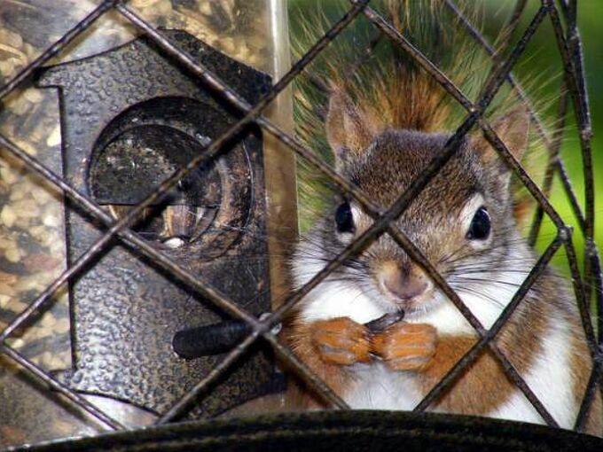 feeding birds by keeping squirrels away, gardening, gardening pests, pets, pets animals