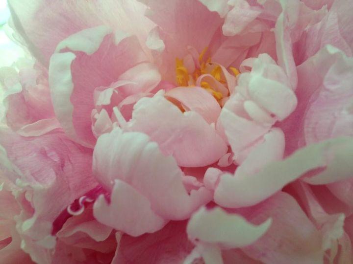 five favorite flowers , flowers, gardening, hydrangea