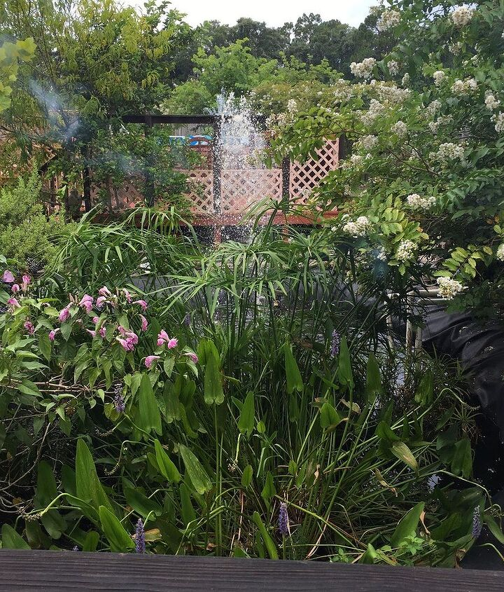 transforming our vacant property into our landscaped paradise, concrete masonry, decks, fences, flowers, gardening, landscape, outdoor living, ponds water features, pool designs, roofing