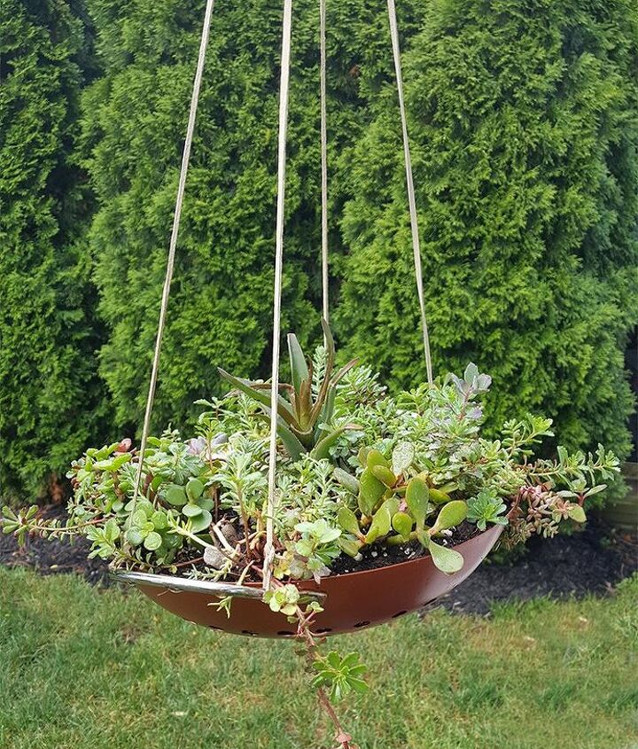 hanging succulent garden, flowers, gardening, repurposing upcycling, succulents