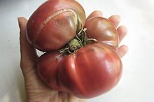easy peasy dyi boost to keep your veggies growing and growing , composting, gardening, go green, plant care, Last Years Beefsteak Tomato Quite a Beauty