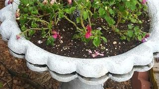 , And here is the leaky thing now an impatiens display just planted yesterday so still getting settled