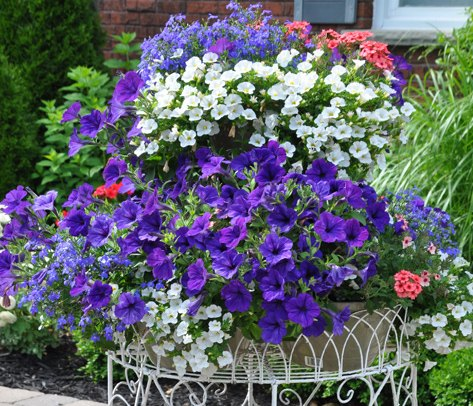 the summer s prettiest container plantings, container gardening, flowers, gardening