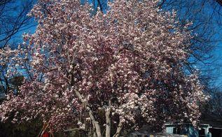 q garden ideas, gardening, gardening pests, landscape