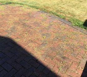 Q Weeds Between Interlocking Brick Patio, Concrete Masonry, Gardening, Pest  Control Laurie Bennett