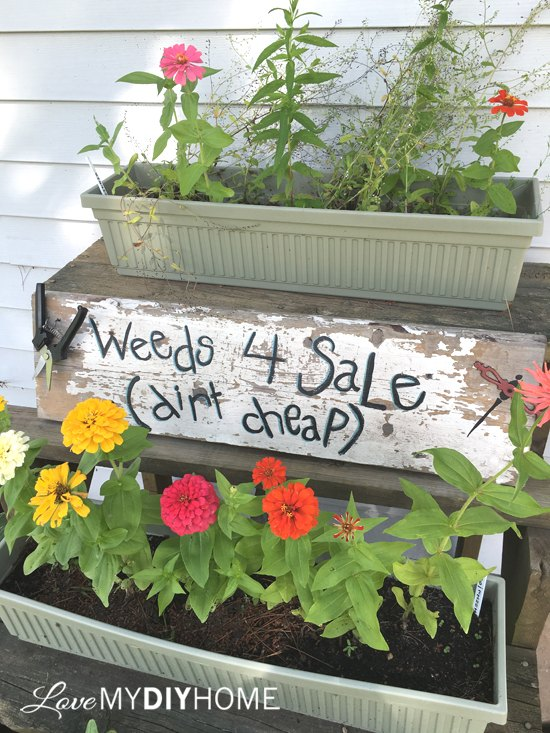 weeds for sale dirt cheap fun diy garden sign, crafts, gardening, how to, painting