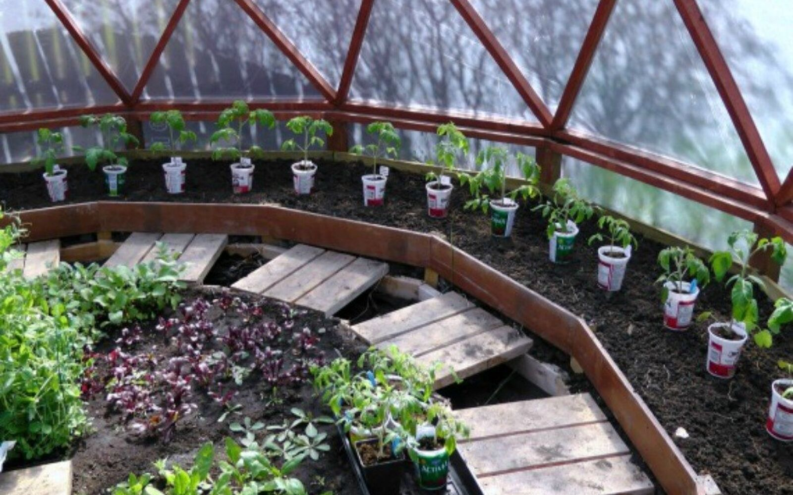 s why everyone is saving their empty food containers, repurposing upcycling, They make perfect tomato planters