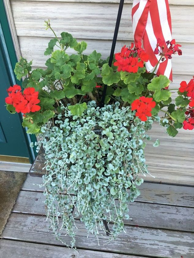 q can any of my garden experts tell me the name of this plant , gardening, plant id