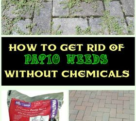 How To Get Rid Of Patio Weeds Without Chemicals, Gardening, Gardening  Pests, How
