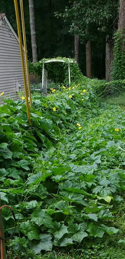 q this plant is in a neighbor s yard they don t speak much english and, gardening, plant id