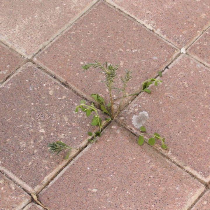 DIY Natural Weed Killer | Hometalk