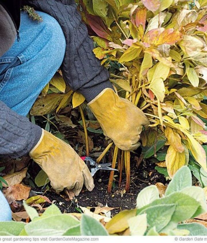 s see how 11 clever gardeners get their yards ready for fall, gardening, They remove any dead growth and debris