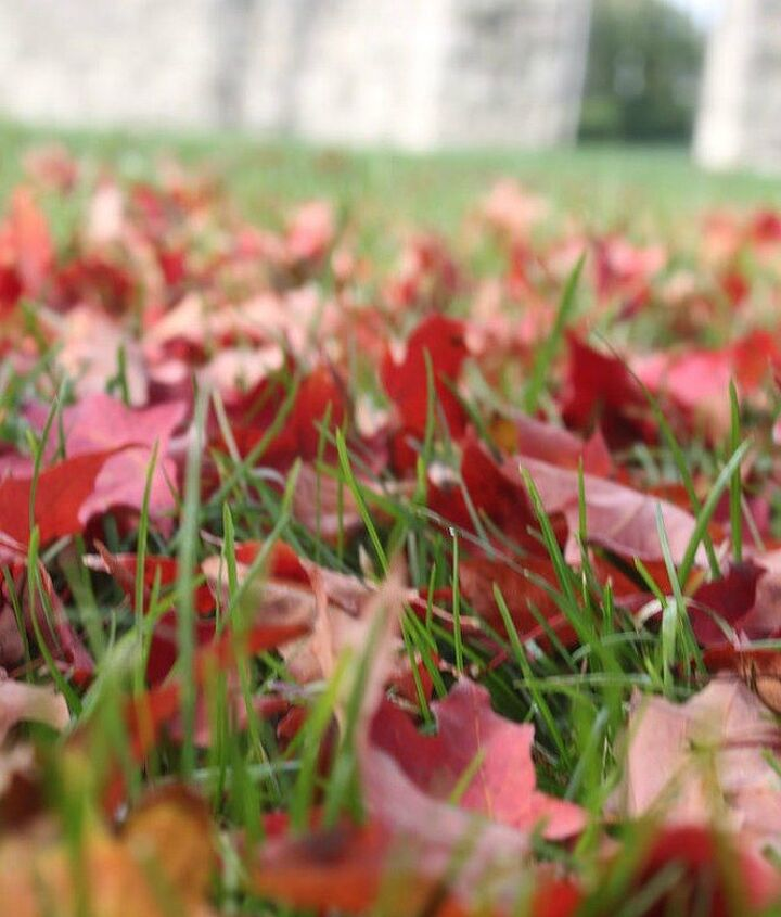 s see how 11 clever gardeners get their yards ready for fall, gardening, They collect leaves for compost