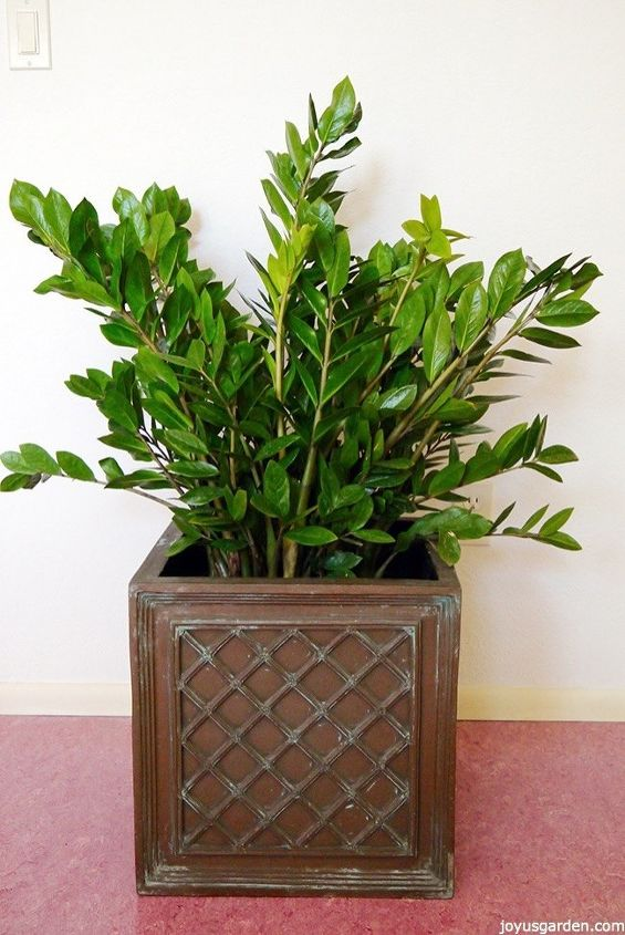 houseplant alert 3 reasons you need the awesome zz plant, gardening, home decor