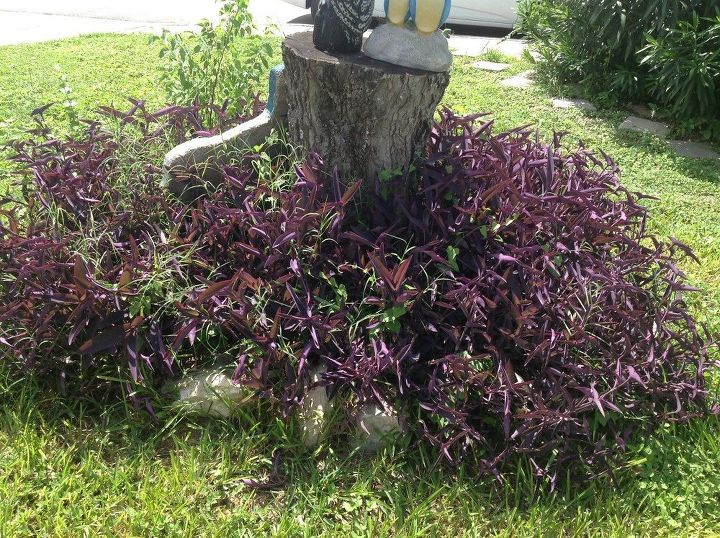 q ideas for this 3 ft stump in my front yard, gardening, home decor, landscape, Another view