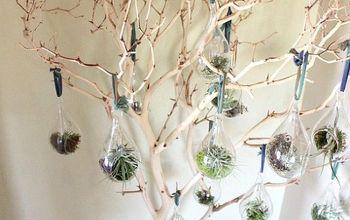 manzanita tree with air plants, christmas decorations, gardening