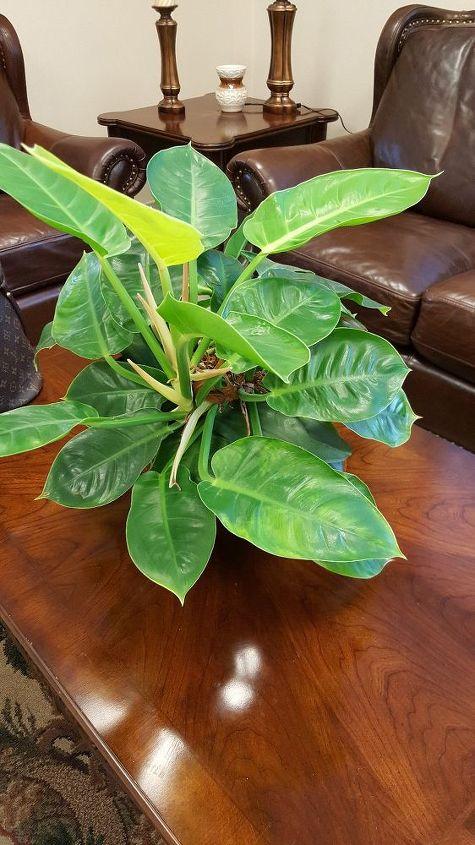 q plant identification , gardening
